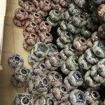 Mozaik lamba Amerika siparişleri hazırlanıyor